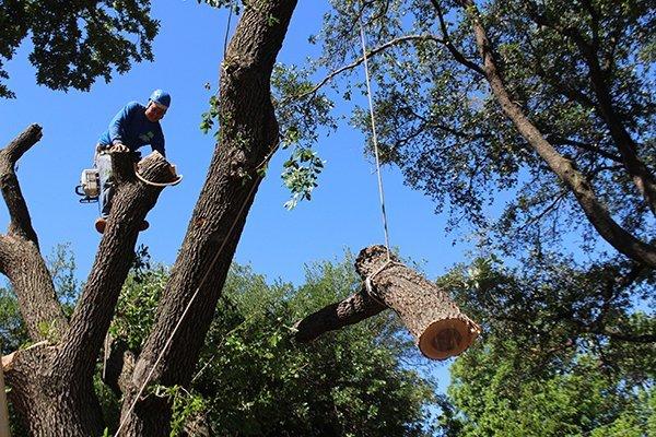 tree removal service utah