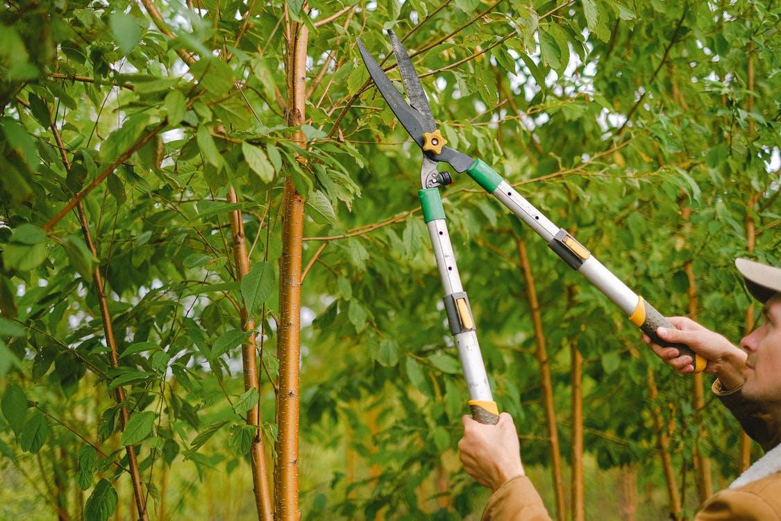 Tree removal companies